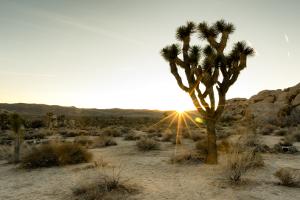 Paul Allen Is Cooking Up Something Big in the California Desert