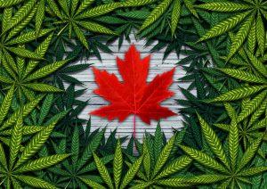 3 Top Canadian Marijuana Stocks in 2018 for U.S. Investors