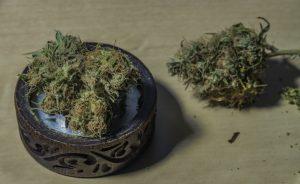 shorted marijuana stocks
