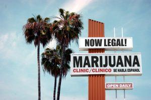 marijuana news today 8 june