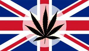 marijuana news today june 19