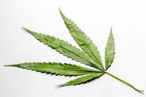 marijuana volatility