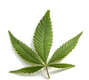 marijuana news today 13 July