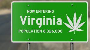 marijuana news for 21 august