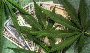marijuana news today 13 september