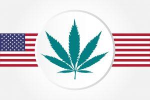 marijuana news today 4 september.