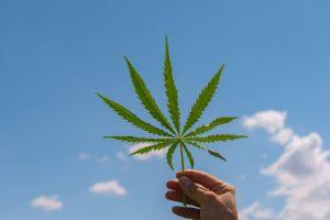 Why-CGC-stock-is-best-bet-in-marijuana-industry