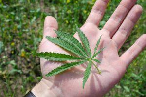 Marijuana News Today: New York Looking to Legalize Recreational Pot