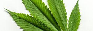 2019 Has Been So Good for the Marijuana Market