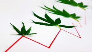 Marijuana Stocks Is the Pot Stock Market Correction-Proof