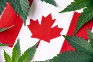 Marijuana News Today