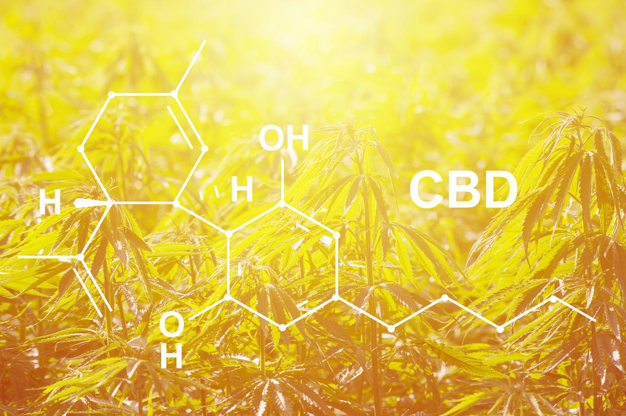 Marijuana News Today: CBD Industry Could Provide Big Gains