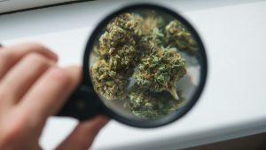 Charlotte's Web Holdings, Inc. Top U.S. Cannabis Stock Soars 22% in July, Fueled By Kroeger Deal