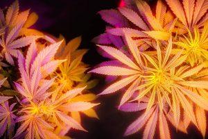 "Marijuana Stocks Could Benefit Greatly as ""Coronavirus Stocks"""
