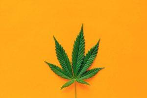 Pot Stocks Look to Surge Following U.S. Marijuana Legalization Push