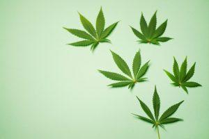 marijuana stock investor
